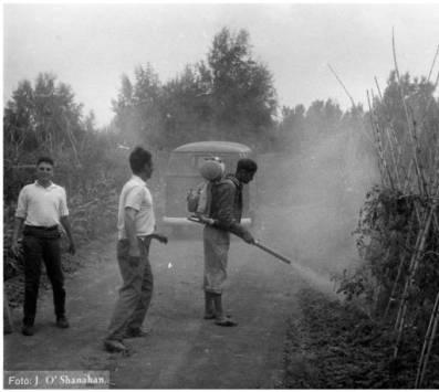 Fumigando plaguicidas en tomateros. Gran Canaria, años sesenta del siglo XX. Archivo fotográfico Jaime O'Shanahan - Memoria digital de Canarias (ULPGC)