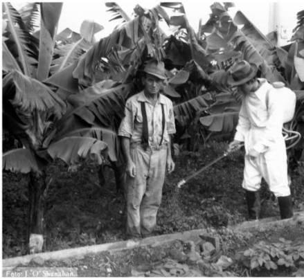 Fumigación con pesticidas de plataneras y cultivos de papas. Gran Canaria, años setenta del siglo XX. Archivo fotográfico Jaime O'Shanahan - Memoria digital de Canarias (ULPGC)
